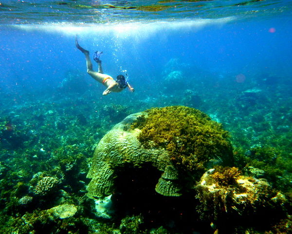 Caramoan Underwater is To Die For. Seriously.