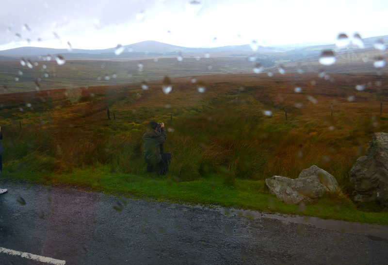 Zombie in action. fields of Wicklow County. Wild Wicklow Tour.