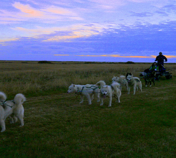 Dogsledding in Iceland – Definitely a Holy Smithereens! Moment