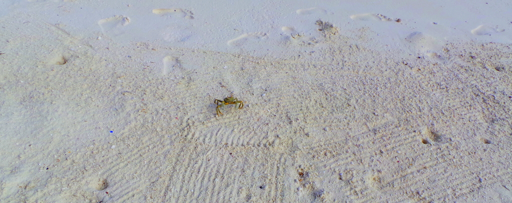 a tiny crab in Lonubo Private Island