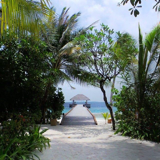 Green and serene : Maafushivaru Maldives