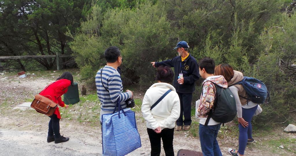 The Walking Quokka Tour, Rottnest Island