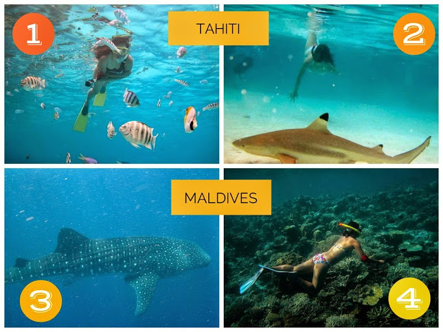 1. Getting chilly underwater in Bora-Bora 2.Chasing Sharks in Bora-Bora 3. Swimming with Whale Sharks in the Maldives 4. Exploring the coral reefs of the Maldives