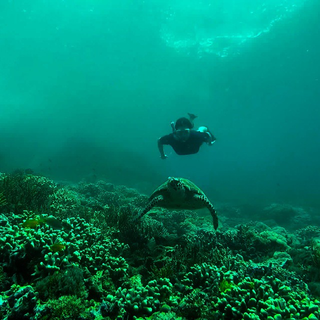 keep your distance from any underwater creature. Swimming with a turtle in Komodo Island