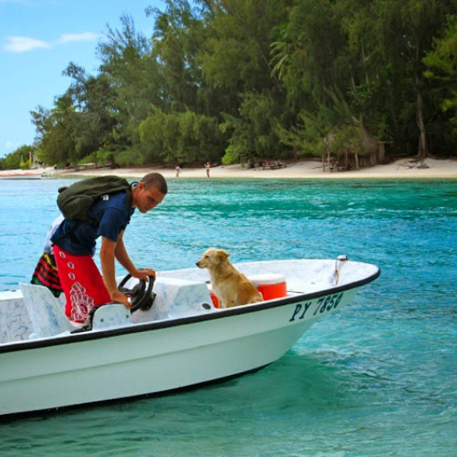 The Apprentice Dog in Bora-Bora