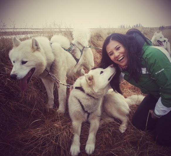 Greenland Huskies in Iceland