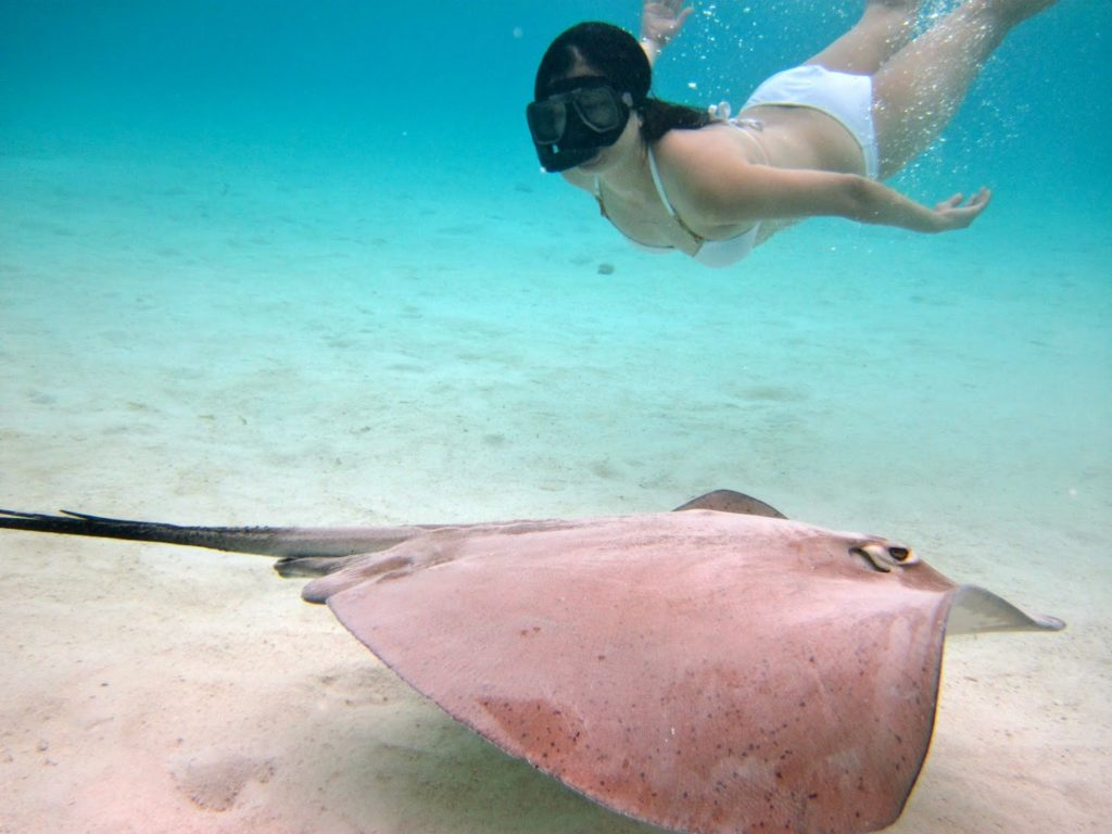 swimming with sting rays. Bora-Bora