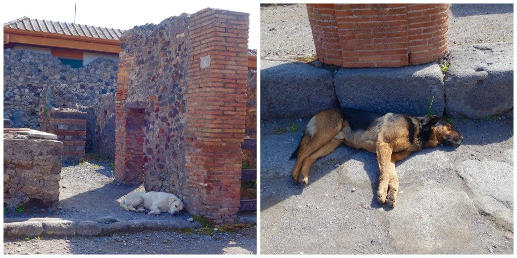 The dogs of Pompeii enjoying a siesta