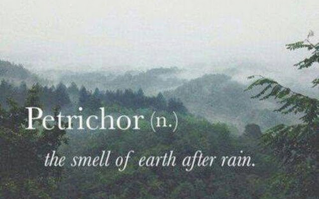 The lovely, comforting smell of petrichor