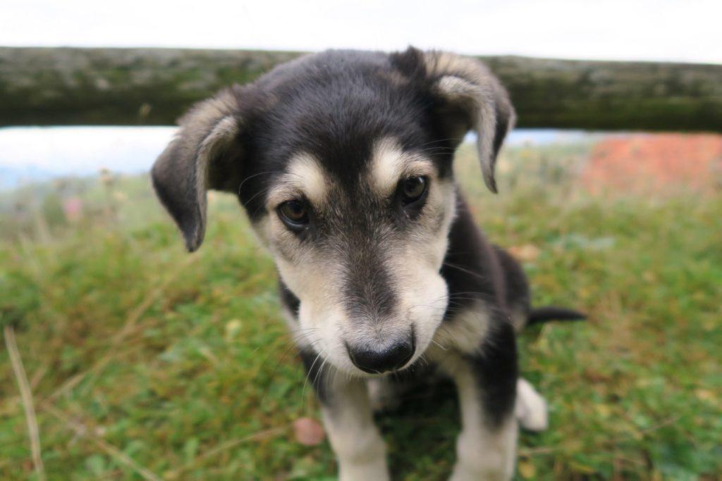 The cutest farm puppy in all of Romania!
