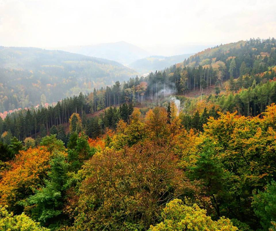 The forests of Karlovy Vary, as viewed from the observation tower (Diana)