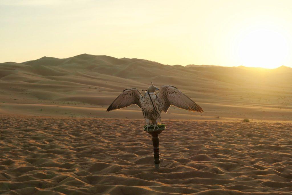 Falconry in Qasr al Sarab, Anantara