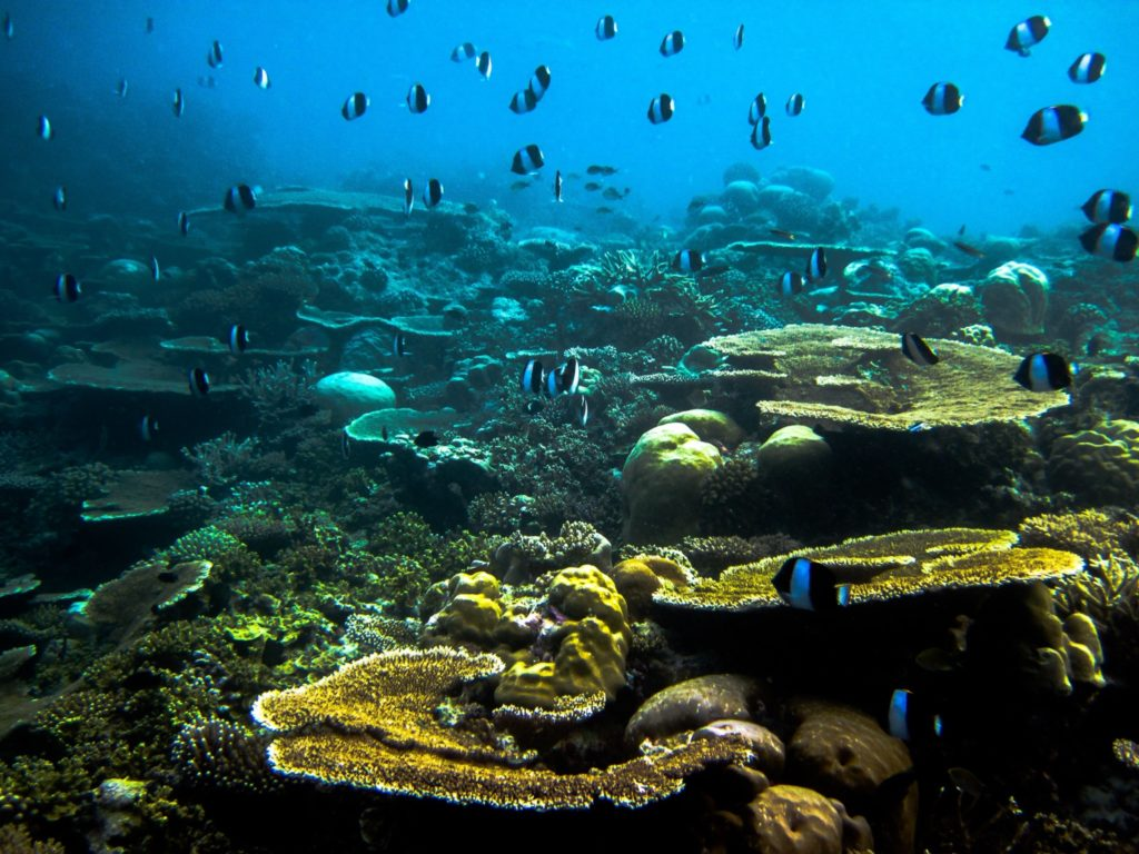 Underwater scene at Anantara Veli Maldives