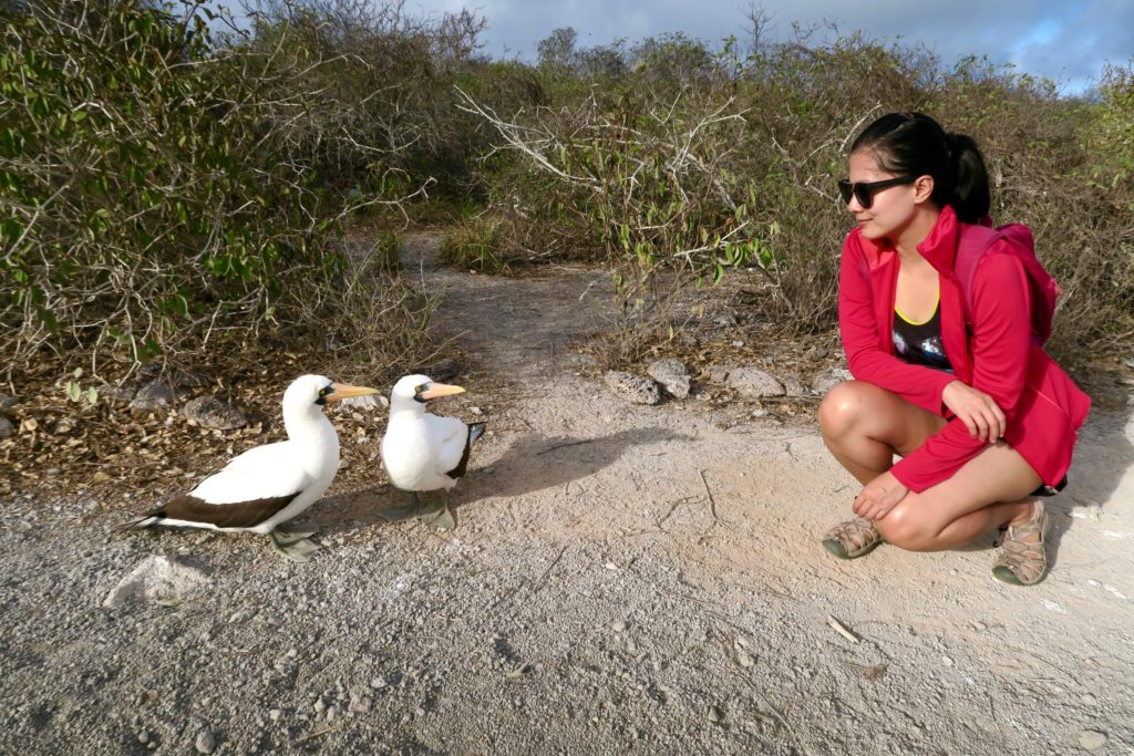 """""""What are you looking at?"""" is what this pair of Nazca Boobies are saying. If Boobies could talk."""