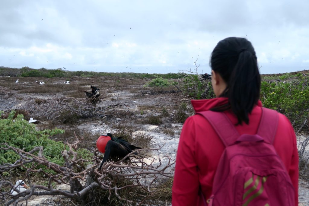 Not Your typical bird watching! Genovesa Island in the Galapagos