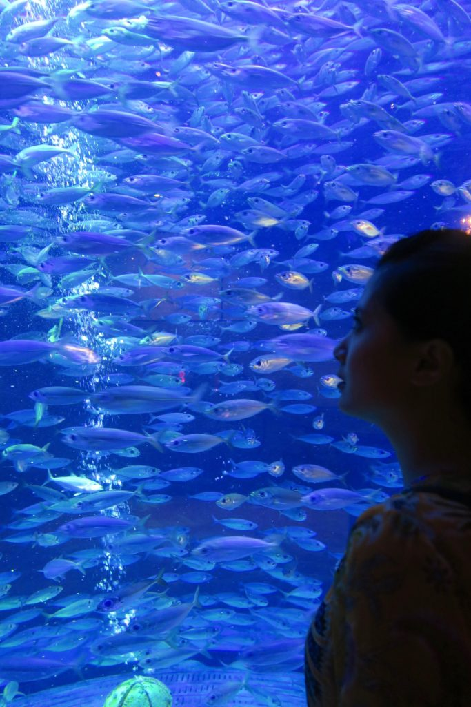 The Lost Chambers Aquarium, Atlantis The Palm