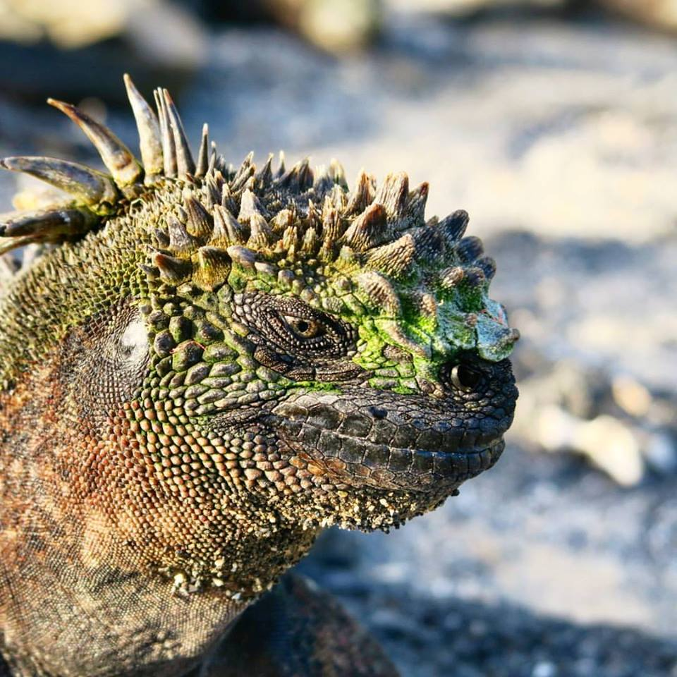 """Be SPF-wise, kid."" Unless you're a marine iguana and you need to absorb sunrays!"