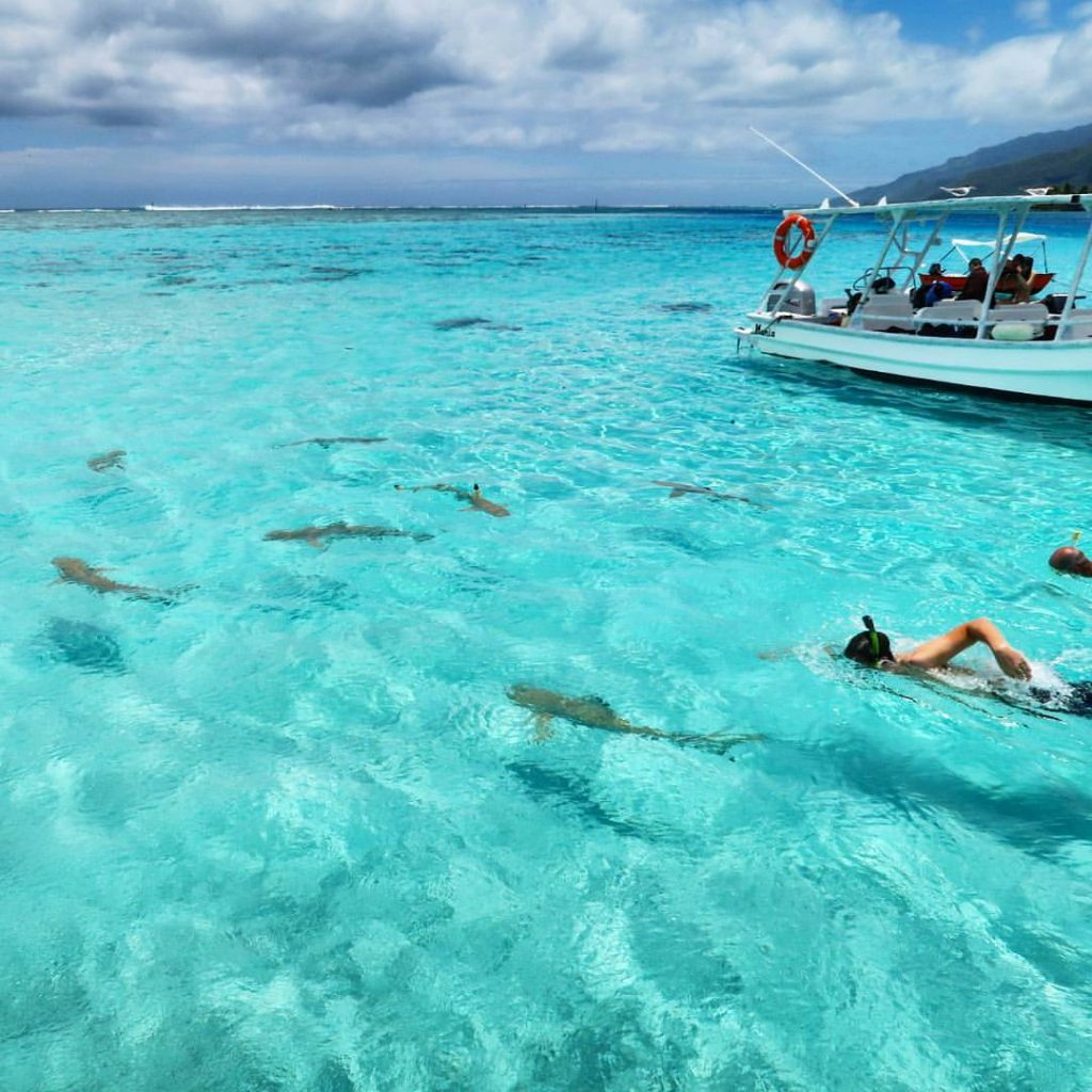 Snorkelling with sharks in Moorea