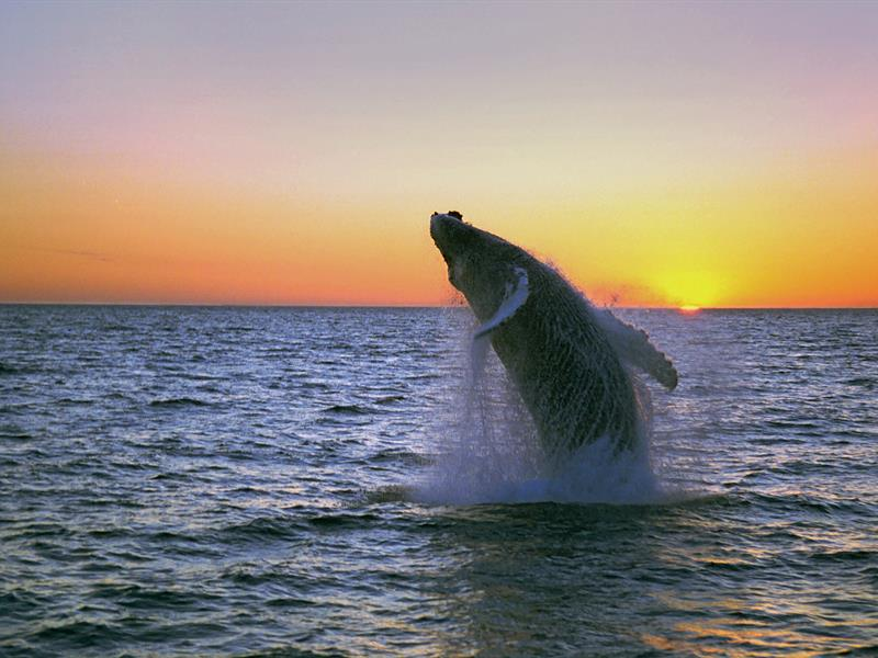 whale watching in iceland. Photo credit: www.iceland.is