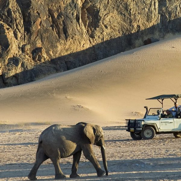 4 Best Places to do a Luxury Safari