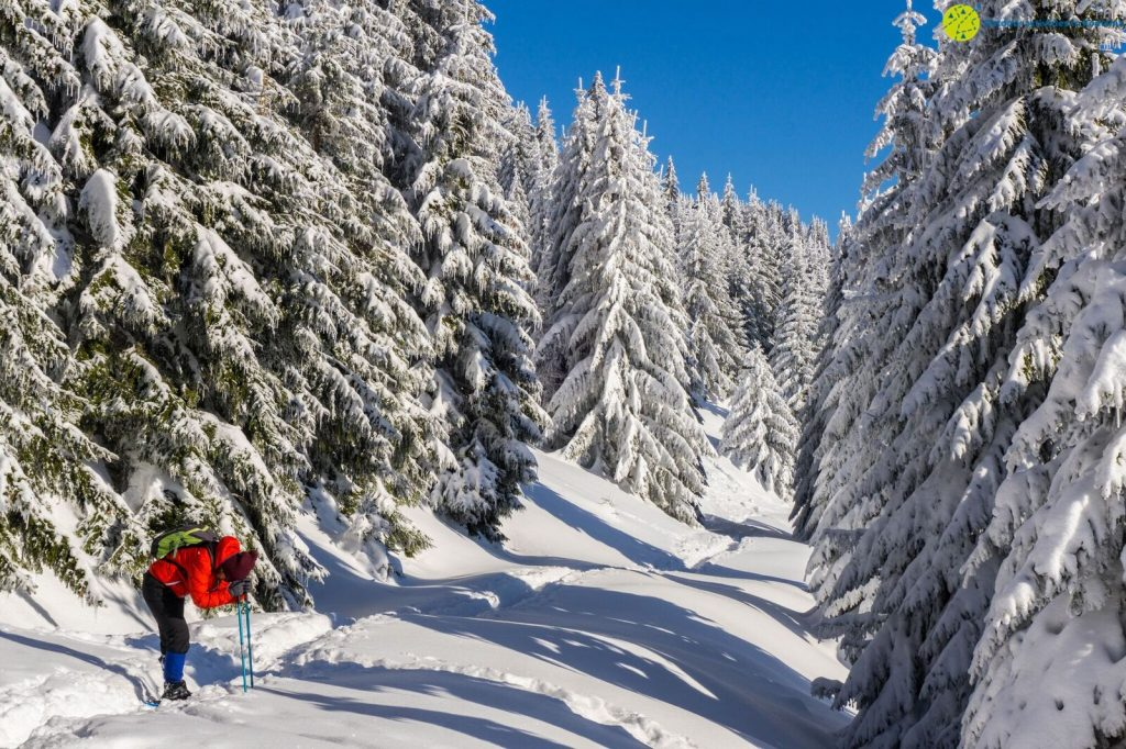 Outdoor Activities in Romania offer guided photography and hiking tours