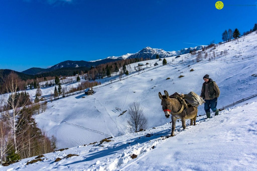 A winter countryside experience in Romania