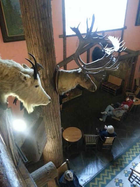 Lake Mc Donald Lodge & the Hunting Culture of Montana