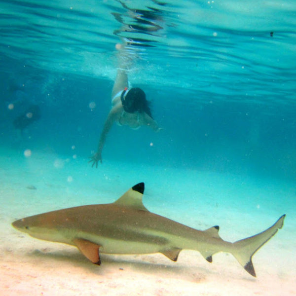 The Beauty of Moorea, Underwater. Swimming with Sharks and Sting-Rays!
