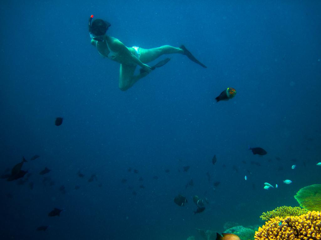 House Reef , Kurumba Maldives