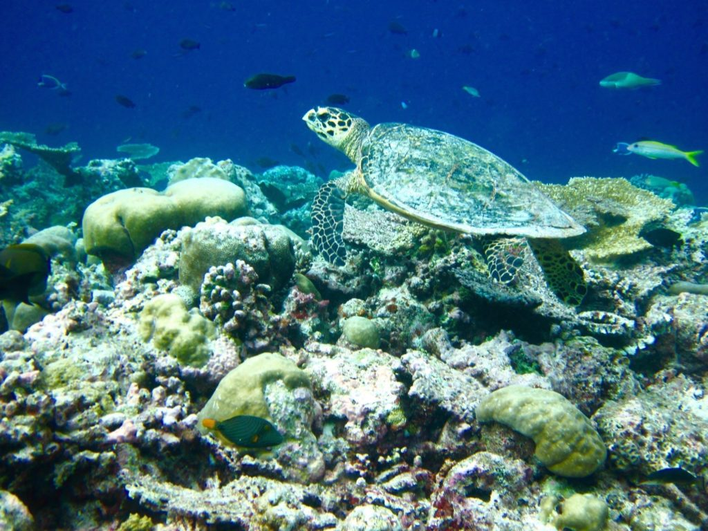 Underwater reef scene, Velassaru Maldives